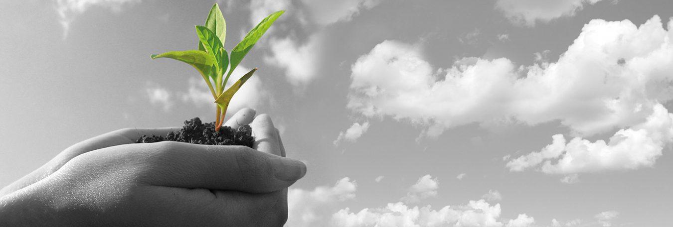 Acreditamos-el-comportamiento-ambiental-de-nuestros-productos